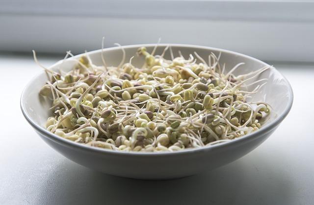 Mungo – kouzelné fazole